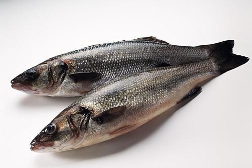 这些鱼类刺少又好吃