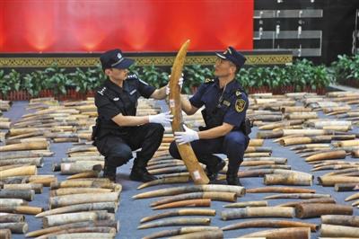 广东海关缉私部查处走私象牙7746公斤