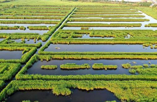 山东威海:夏日湿地美如画